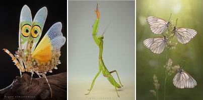 nature-photography-siwanowicz