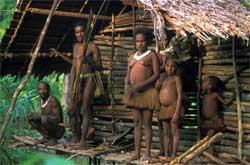 papua-tree-houses