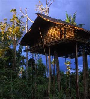 papua-tree-houses