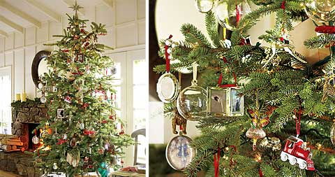 tree symbolize the spirit of the season, for this year's holiday