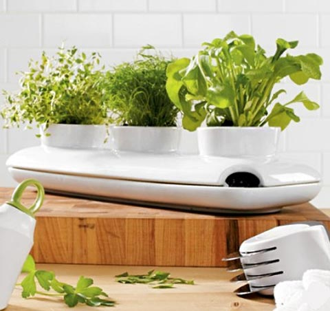 Sagaform herb pot a perfect little herb garden cooking Kitchen windowsill herb pots