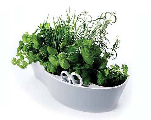 herb garden - How to Create a Herb Garden in your Kitchen?