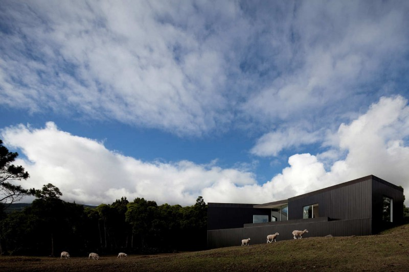 prefab home cz house1 800x533 - CZ house: A prefab surrounded by sheep