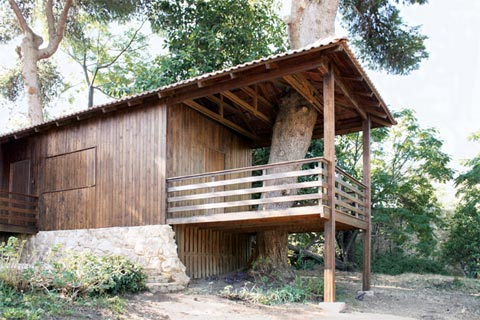 shipping-container-cabin-tree-1