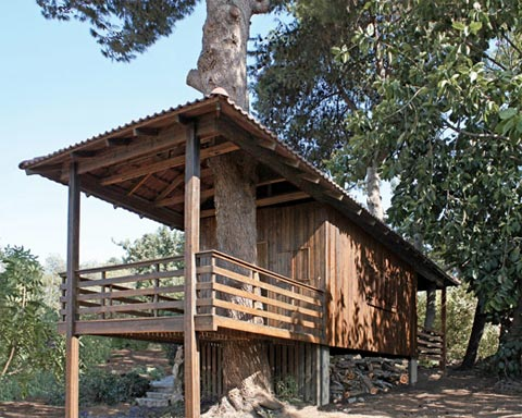 Two-tree house: among Jerusalem pine trees
