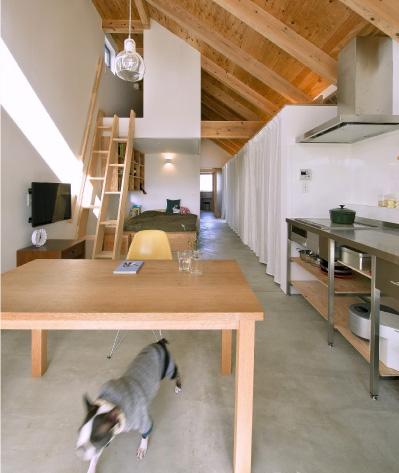 small-house-dogsalon6
