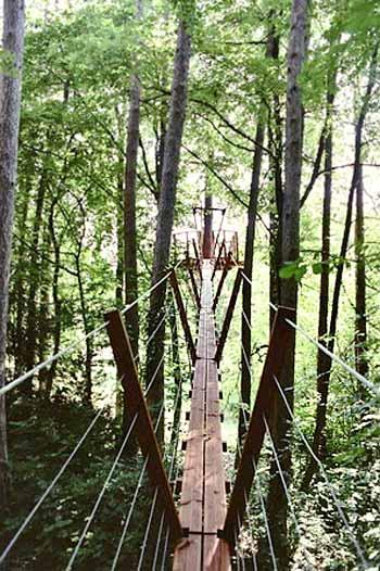 treehouse-bridge-sophie
