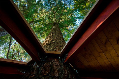 treehouse-design-hemloft-09