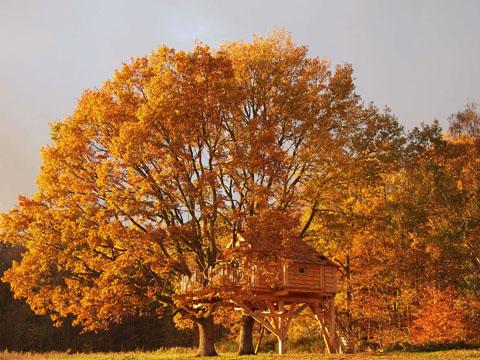 treehouse-design-perche