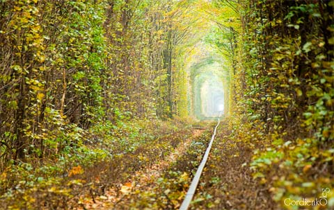 tunnel of love ukraine 3 - The Tunnel of Love: A place lost in time