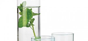 water-carafe-simply2